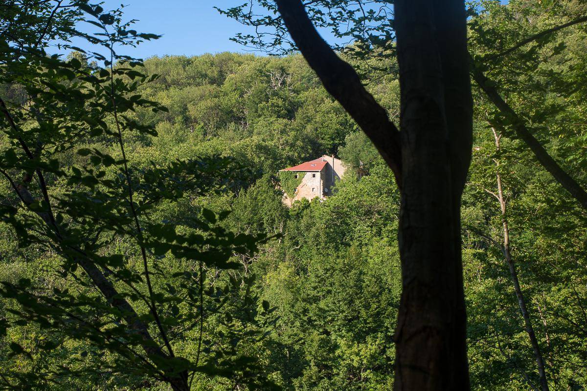 casa-nel-bosco-2925