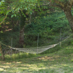 casa-nel-bosco-3124