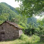 casa-nel-bosco-8404