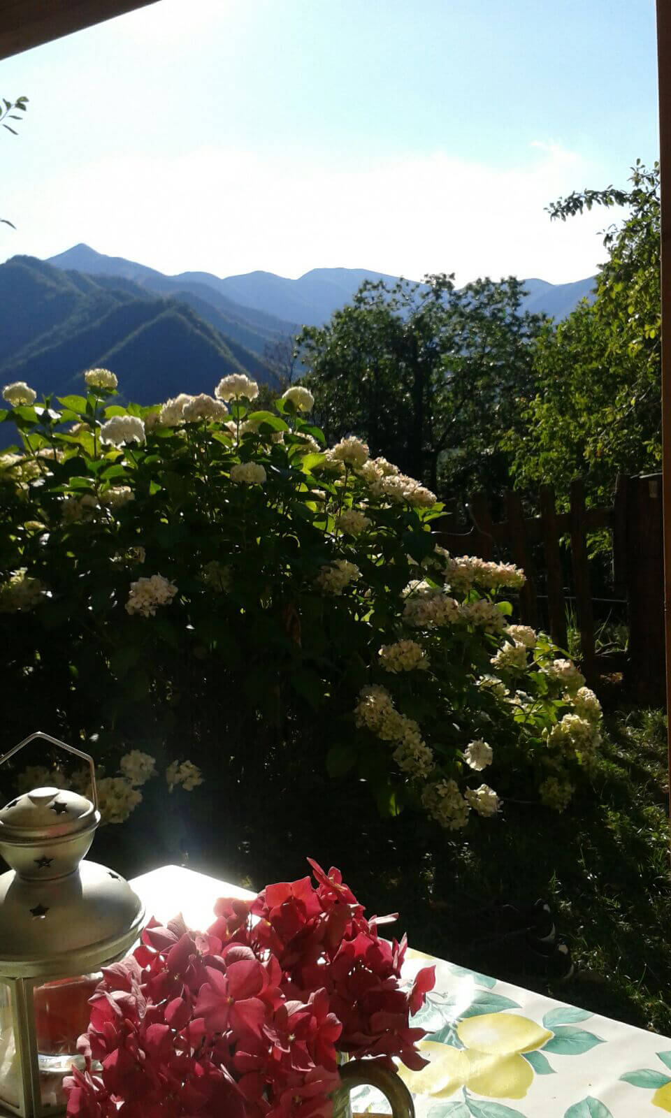The view from the guest-house