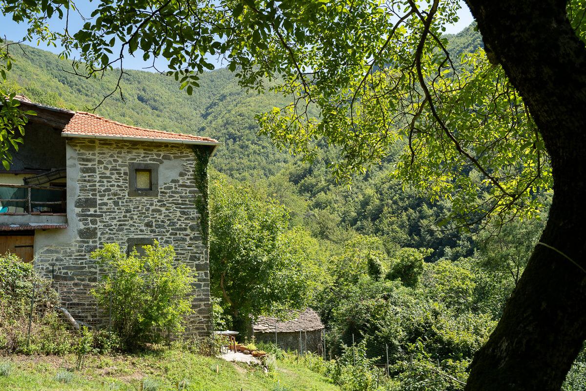 casa-nel-bosco-8616
